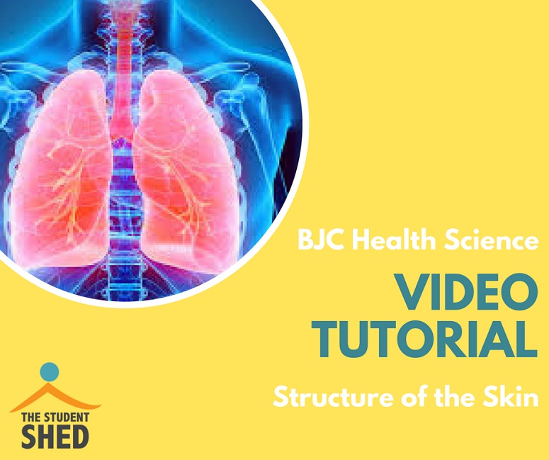 BJC Health Science Tutorial – Structure of the Skin